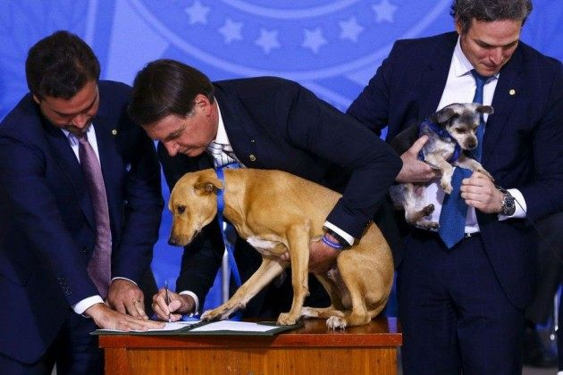 Bolsonaro sanciona pena maior a quem maltratar cães e gatos