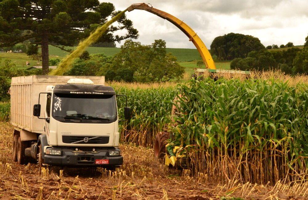 Boletim da Epagri aponta que a estiagem afeta produção de grãos em SC