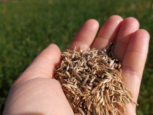 Kit Solo Saudável facilita o acesso dos agricultores catarinenses a sementes de plantas de cobertura
