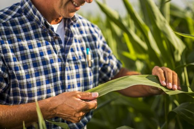Seara tem vagas abertas para graduação nas áreas de gestão em agronegócio