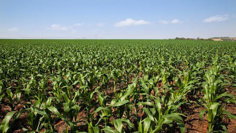Santa Catarina investe milhões para aumentar a produtividade das lavouras
