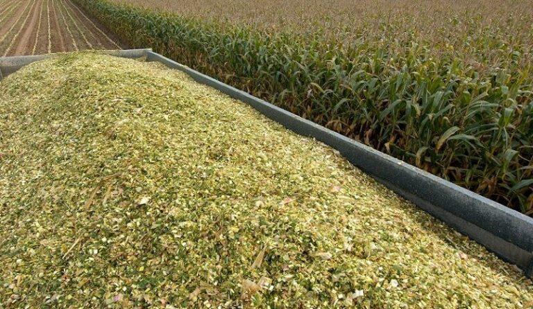 Prefeitura de Xavantina auxilia produtores no processo de produção de silagem