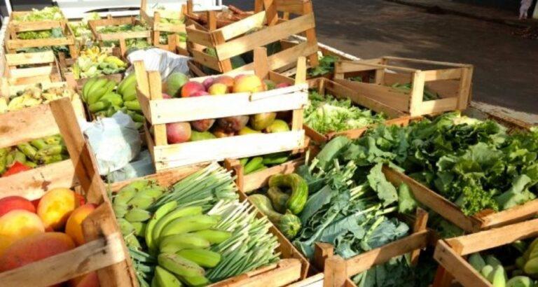 Produtores rurais de SC poderão emitir nota fiscal manual para o Programa de Aquisição de Alimentos