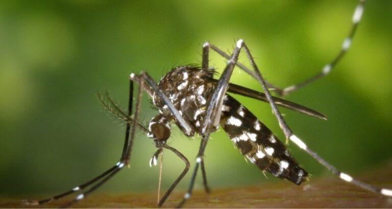 Saúde alerta sobre casos de chikungunya em Seara