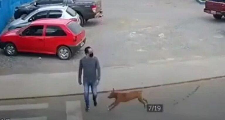 (VÍDEO) Viralizou: Câmera de segurança flagra cachorro atropelando pedestre