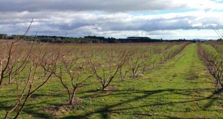 Epagri recomenda práticas para diminuir prejuízos nos cultivos durante o inverno; veja