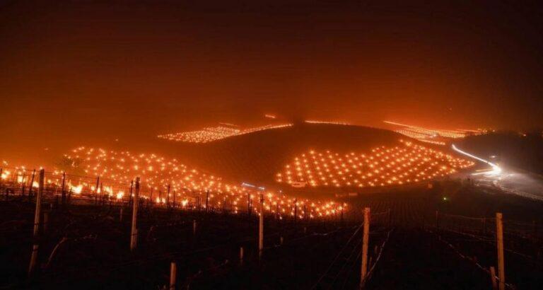 (VÍDEO) Plantação de uva: Helicóptero e mar de velas espantam geada na França