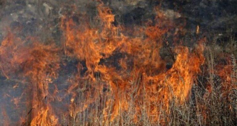 Período de seca eleva preocupação com incêndios florestais; Bombeiros de Seara alertam