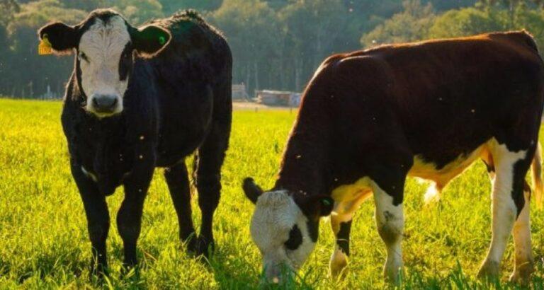 Estados do Sul unem esforços para manter a saúde dos rebanhos e proteger o agronegócio