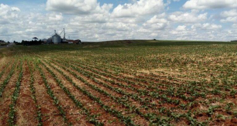 Ministério da Agricultura estabelece calendário de semeadura de soja obrigatório para SC