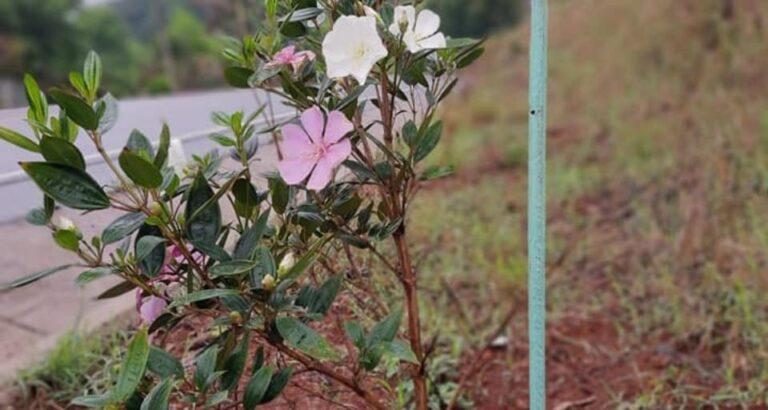 No Dia da Árvore, Arvoredo destaca plantio de mais de 200 mudas em território municipal nos últimos meses
