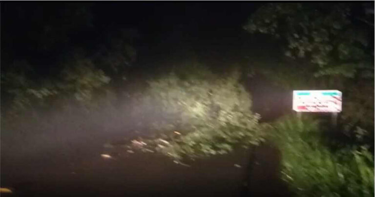 (VÍDEOS) Itá: Queda de árvore interdita parcialmente a SC-155